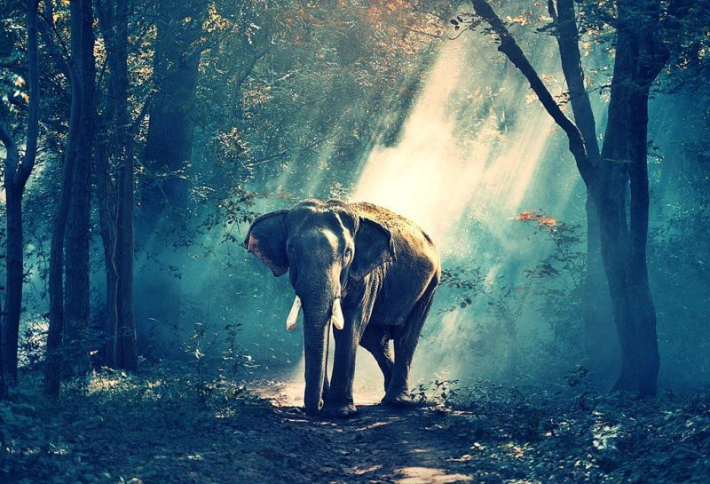 hijabpacker sumatera elephant