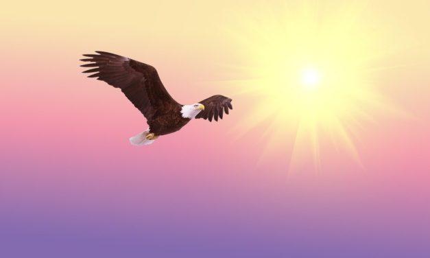 Somos Águilas no gallinas