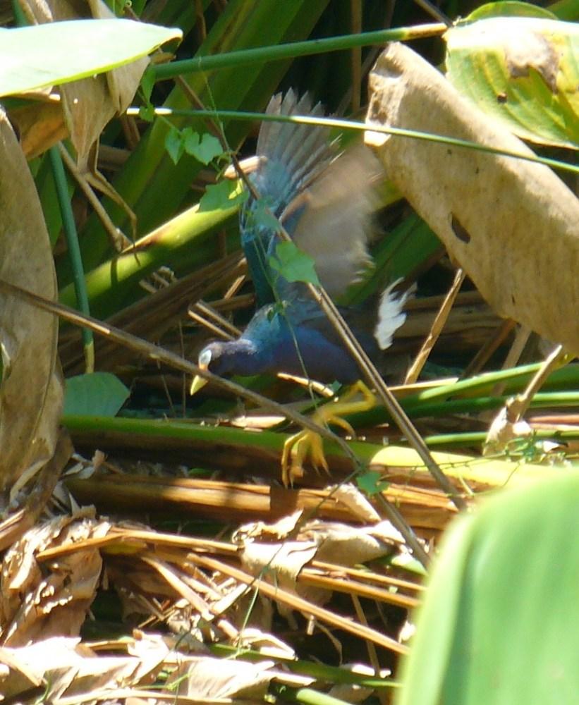 Aves de Humedal II (1/6)