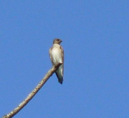 Aves de Humedal II (6/6)