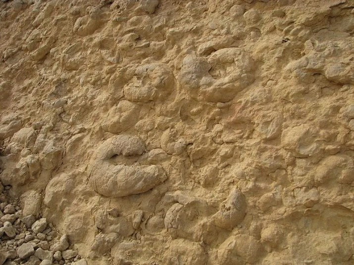 The Ammonite Wall