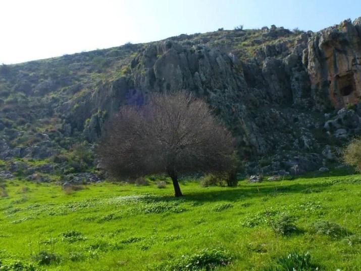 Green meadows along the Sea to Sea Trek, Galilee, Israel