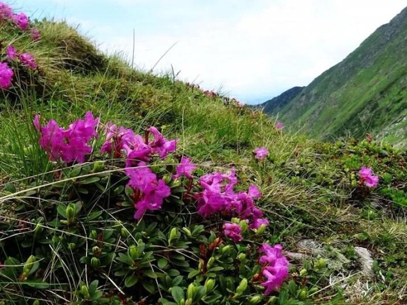 פרחים באחו