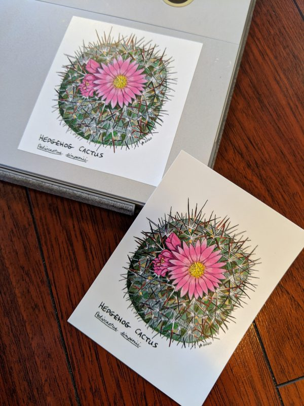 hedgehog cactus sticker