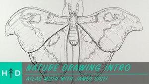 intro-atlas_moth-thumbnail