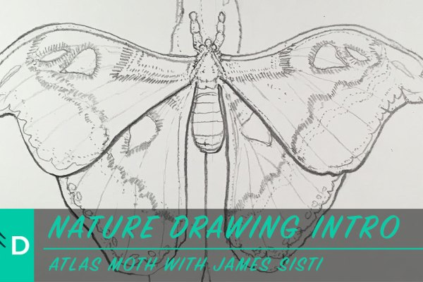 how to draw a moth