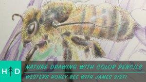 color_pencil-honeybee-thumbnail