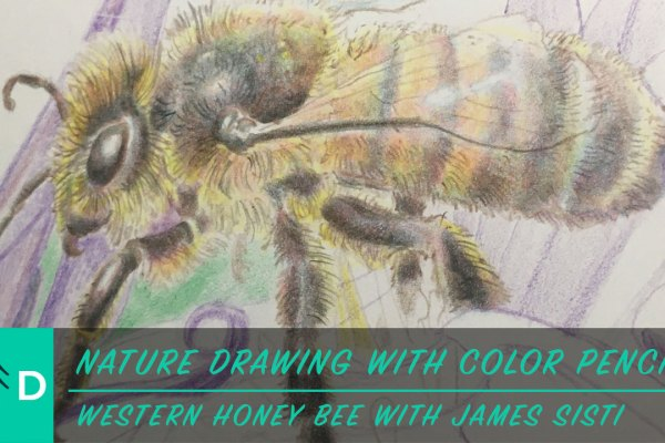 how to draw a honey bee