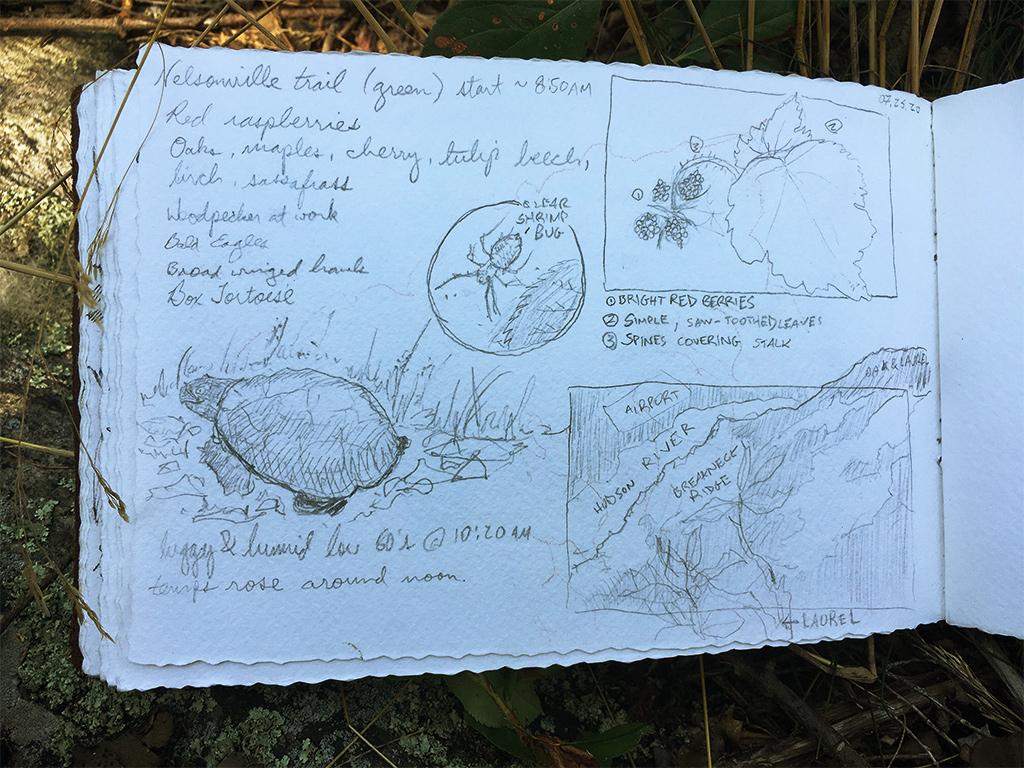 Best Field Sketching Kit for Beginners 4