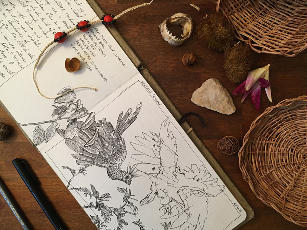 nature journaling and field sketching 1