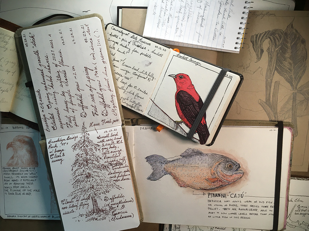 journaling in nature 2