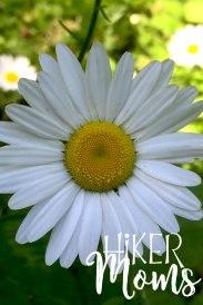 Maple Ridge Trail Estacada ORegon Milo McIver STate Park HIker Moms daisy wildlife