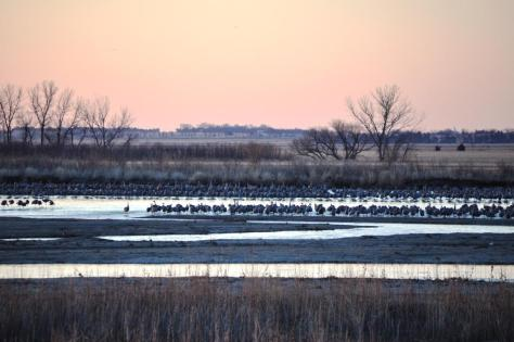 crane migration 1