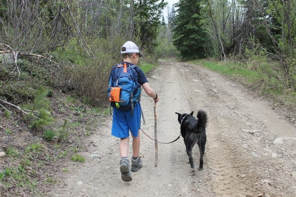 hello i am floyd, walks and wags, on-leash hiking trails near vancouver, dog-friendly hikes