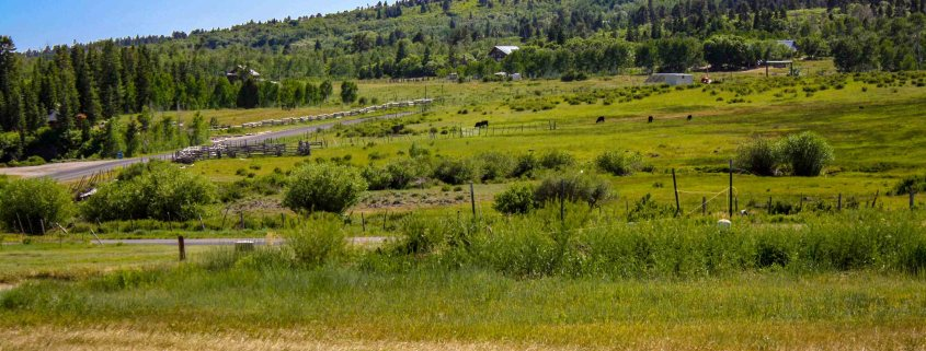 Green fields on Kolob used for cattle grazing