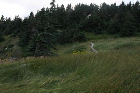 The trail winds through meadow in Witless Bay.,