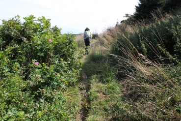 The trail begins as a cart path, passing berries, roses, and more.