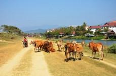 Traffic in Vang Vieng