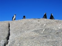 Penguin Boulder