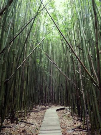 Bambusrohre im Wind