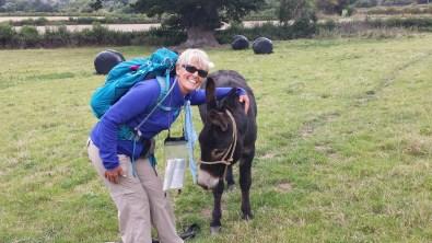 donkey2015-09-09 08.00.17