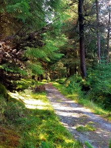 wooded trail20180829_162442