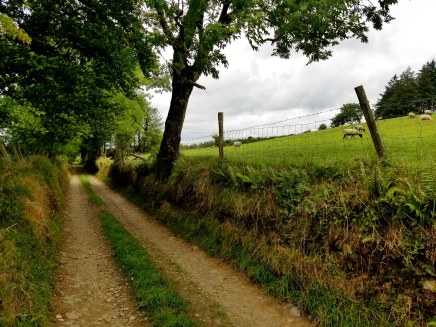 country lane20180831_144239