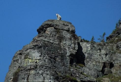 goat overlook