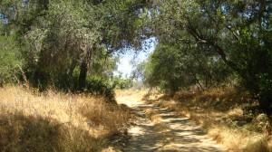 Summer shade at Caspers Wilderness Park, Orange County, CA