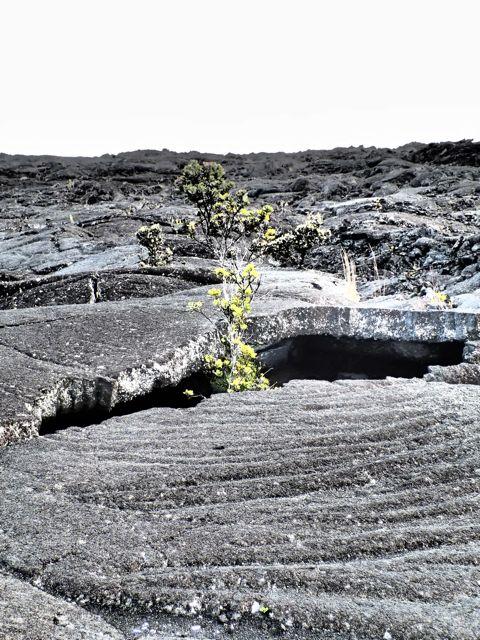 Pu'u Huluhulu Lava Fields