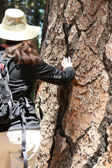 Hiking Lady wearing the 5.11 Women's Horizon Hoodie