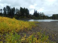 Color on the Willamette