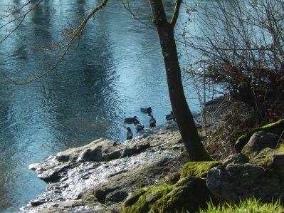 Cute riverbank family
