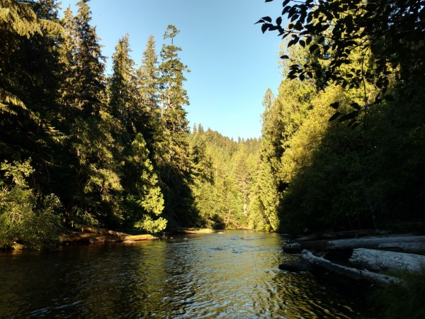 Gorgeous light on the upper reaches of the Clackamas River