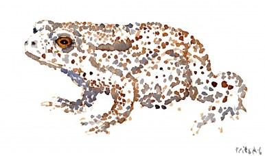 Common Toad watercolour