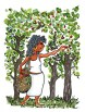 Woman picking fruit from a tree