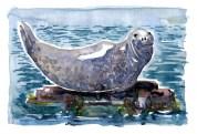 watercolour of Gray Seal