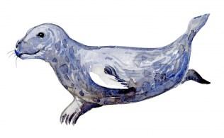 Watercolor of Gray Seal