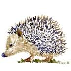 illustration of a hedgehog