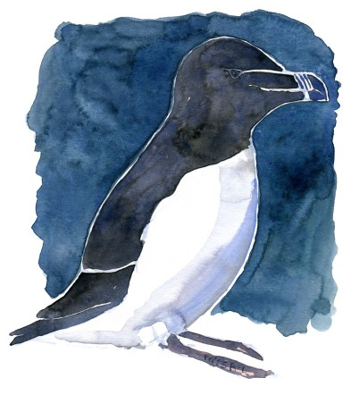 watercolor of a small pinguin like bird