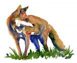 Watercolor of Fox