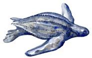 Leatherback turtle in Watercolor