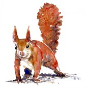 Angry Squirrel watercolor