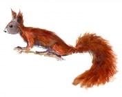 Watercolor of squirrel