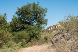 Oaks and boulders line the trail side