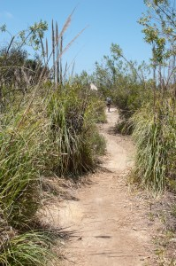 Trail leading to Le May Pond at Otay Valley Regional Park