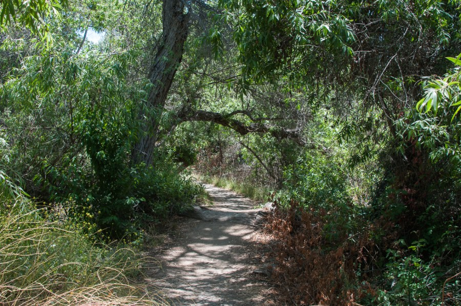 The Nature Trail at Guajome Park