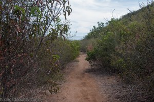 The brush grows high on the upper sections of the Bernardo Mountain Trail