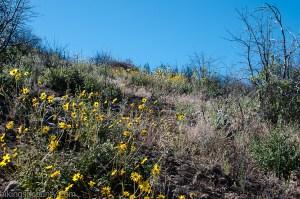 Wildflowers grow along the PCT en route to Garnet Peak