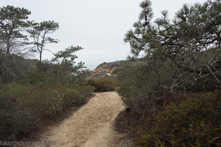 The Guy Fleming trail at Torrey Pines